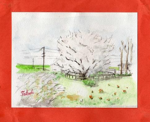 中公園の老桜